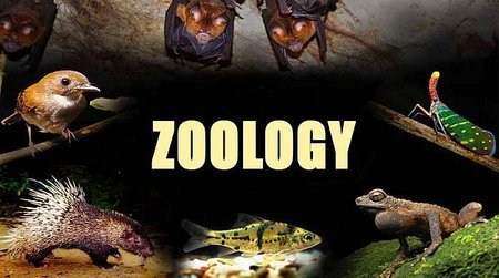 zoology career path