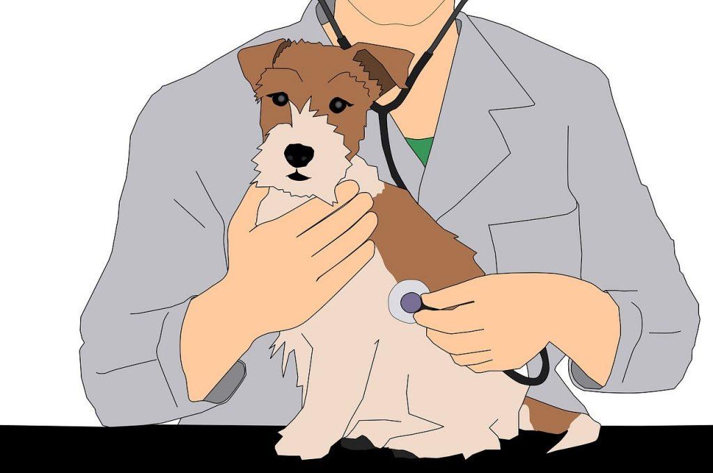 vet pros and cons; vet, animal, illustration